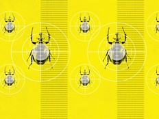 Beetles crawling up a yellow background